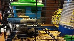 Отдается в дар «Сатиновые мышки.»