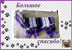 Отдается в дар «Одежда для маленьких собак»