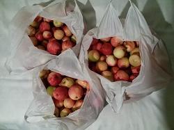 Отдается в дар «Яблоки»