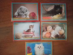Отдается в дар «Календарики «Котята». (Частн.выпуск).»