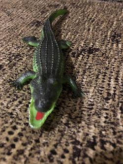 Отдается в дар «крокодил»