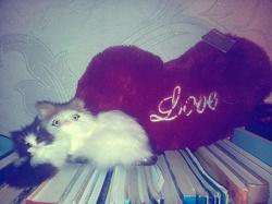 Отдается в дар «Котенок»
