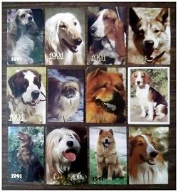 Отдается в дар «Календарики-собаки»