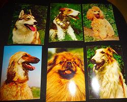 Отдается в дар «открытки «Наши верные друзья»»