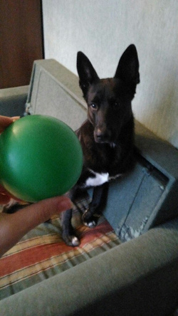 Отдается в дар «Мяч для собаки»