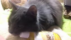 Отдается в дар «Шампунь для котят»