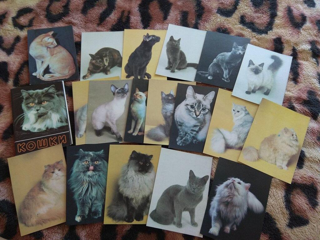 Кошки набор открыток
