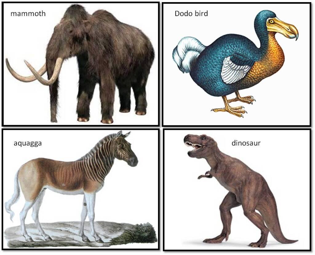 кадр вымершие животные с картинками этом ролике показано