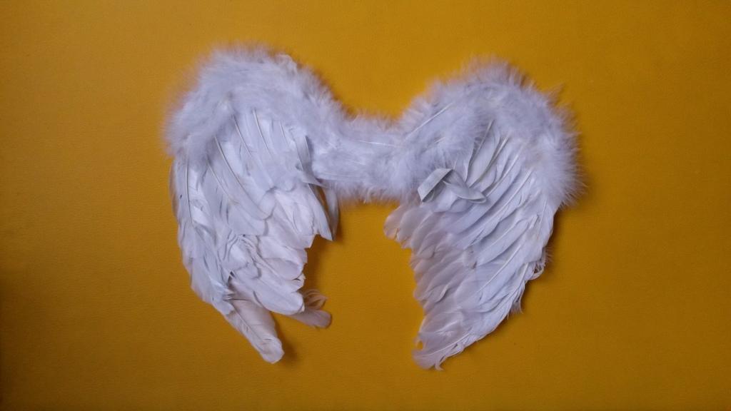 картинка крылья из перьев установки натяжных
