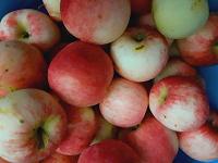 Отдается в дар Яблочки