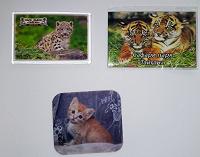 Отдается в дар магниты сафари парк «Тайган»