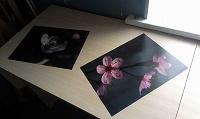 Отдается в дар 2 фотографии «Яблоня в цвету»