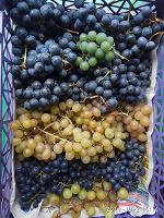 Отдается в дар Черенки винограда