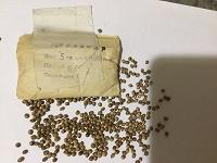 Отдается в дар Кориандр, семена