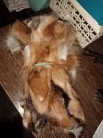 Отдается в дар мех от лисы на хм
