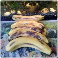 Отдается в дар Бананы