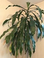 Отдается в дар Растение домашнее