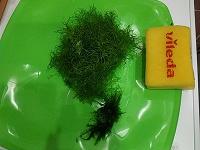 Отдается в дар Риччия и мох феникс-для аквариума