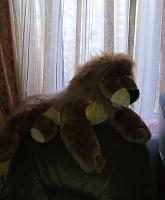 Отдается в дар Лев