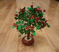Отдается в дар декоративное деревце