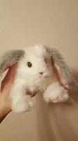 Отдается в дар Кролик