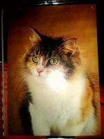 Отдается в дар Фото открытка Кошка