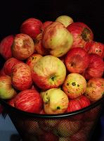 Отдается в дар Яблоки с дачи.