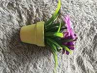 Отдается в дар Растение для интерьера