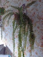 Отдается в дар Комнатные растения.
