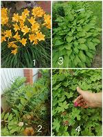 Отдается в дар Растения для сада-огорода