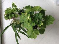 Отдается в дар Комнатные растения