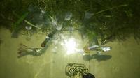 Отдается в дар Рыбки гуппи