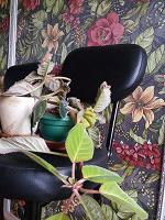Отдается в дар Цветы ищут приют — создадут уют (: