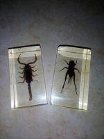 Отдается в дар Кубы с насекомыми от Деагостини