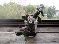 Отдается в дар Комнатные цветы