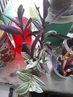 Отдается в дар Отростки домашних цветов в дар