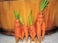 Отдается в дар Морковь и свекла не кондиция