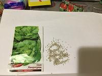 Отдается в дар Семена салата Аттракцион