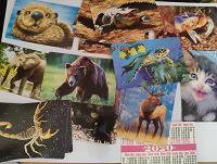 Отдается в дар Календарики животные в коллекцию