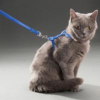 Отдается в дар Поводок для кота