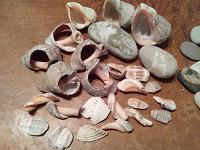 Отдается в дар Ракушки, камушки с моря