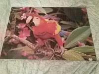 Отдается в дар пазл попугай