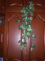 Отдается в дар Ветка зелени