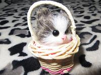 Отдается в дар Котёнок в лукошке.