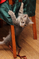 Отдается в дар котята