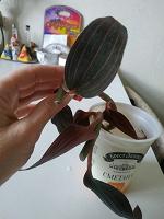 Отдается в дар Черенки драгоценной орхидеи-2шт.