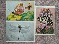 Отдается в дар Открытки с бабочками и стрекозами