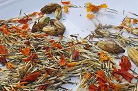 Отдается в дар Бархатцы семена