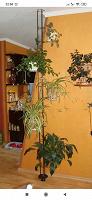 Отдается в дар Подставка для цветов в распор между потолком и полом.