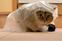 Отдается в дар Кот в мешке